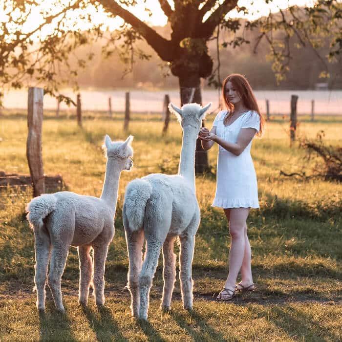 Alpakafarm-Finja-and-Friends_Unsere-Farm_unten-links_