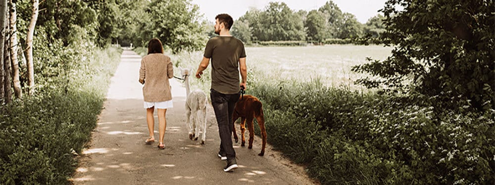Alpaka-Spaziergang_Produkte
